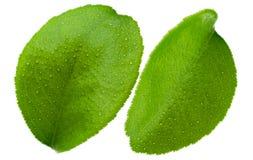 Лист цитруса Стоковые Фотографии RF