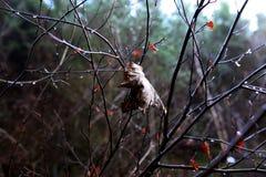 Лист льнут дальше несмотря на влажные условия Стоковые Изображения