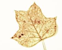 Лист (117) Стоковые Фото