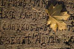 Лист Стоковая Фотография RF