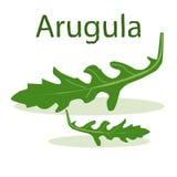 Лист arugula на салатовой предпосылке Стоковые Фотографии RF