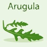 Лист arugula на салатовой предпосылке Стоковые Изображения RF