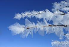 Лист Frost в Лапландии Стоковая Фотография RF