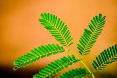 Лист Greene Стоковые Изображения RF