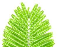 Лист Honeylocust Стоковое фото RF