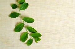 Лист Moringa на предпосылке деревянной доски Стоковые Изображения
