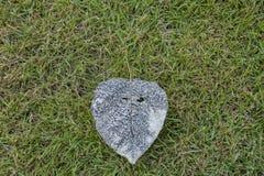 Лист Po кладя на землю зеленой травы стоковое фото rf