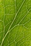 Лист veins макрос Стоковое Фото