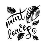 Литерность искусства листьев мяты с листьями свежей мяты на белой предпосылке Стоковое Изображение RF