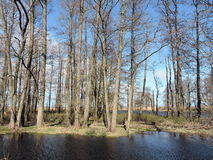 Литовский ландшафт весны Стоковое фото RF