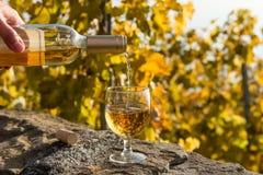 Лить белое вино в стекло против предпосылки виноградника Стоковые Изображения RF