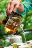 Лить зеленый чай на природе Стоковое Изображение RF