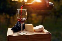 Лить красное вино в стекло в винограднике стоковые изображения