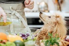 Лить оливковое масло на свеже сделанном салате Стоковое Изображение RF