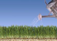 лить травы Стоковые Фото