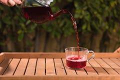 Лить чай гибискуса от чайника в чашку стоковые изображения