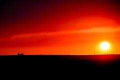 Лифт зерна на заходе солнца Стоковая Фотография RF