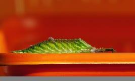 личинки Стоковое фото RF