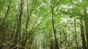 Личная перспектива идти на путь в лесе видеоматериал