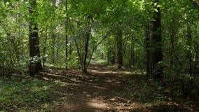 Личная перспектива идти на путь в лесе сток-видео