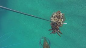 Личная перспектива подводных каракатиц охоты spearfisher Spearfishing в море сток-видео