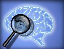 личность тождественности мозга Стоковое Изображение RF