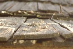 Лишайники и грибок на поврежденной деревянной крыше Стоковое Изображение RF