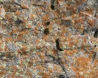 Лишайники Porpidia от фьорда Berufjordur, Исландии Стоковые Фото