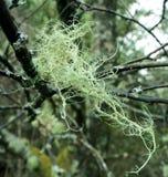Лишайник дерева Стоковое фото RF