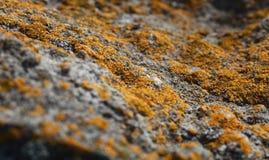 Лишайник и ландшафт макроса камня Стоковое Изображение