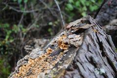 Лишайник и грибной крупный план на журнале стоковое изображение rf