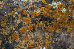 Лишайник и мох на предпосылке утеса Стоковые Изображения RF
