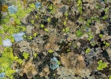 Лишайник и мох на предпосылке утеса Стоковые Фотографии RF