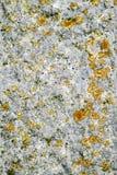 Лишайник и мох растя на камне гранита Стоковая Фотография