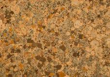 Лишайник и мох Стоковое Изображение
