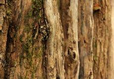 Лишайник и мох стоковые фотографии rf