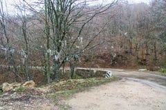 Лишайник на деревьях Стоковые Фотографии RF