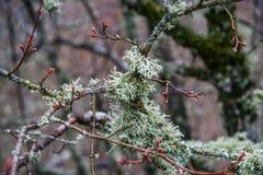 Лишайник на деревьях Стоковые Фото