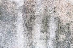 Лишайник на старой белой стене Стоковое Изображение