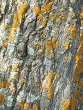 лишайник осины стоковое фото rf