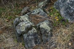 Лишайник покрыл утес вдоль пола леса Стоковые Изображения RF