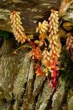 Лишайник покрыл стену сух-камня в Девоне стоковое изображение