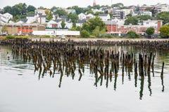 Лишайник покрыл столбы в гавани Портленда стоковая фотография rf