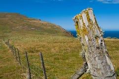 Лишайник покрыл столб загородки Стоковое Фото