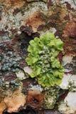 Лишайник, ржавчина и облупленная краска Стоковые Изображения RF