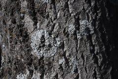 лишайник Стоковое Изображение