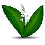 Лилии весны долины Стоковые Изображения RF