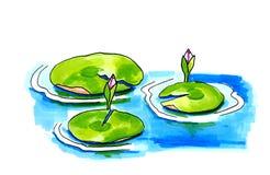 Лилии воды в озере Стоковое Фото