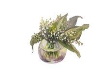 Лилии изолированной акварели долины Стоковое Изображение RF