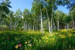 Лилии и белая береза Стоковые Изображения